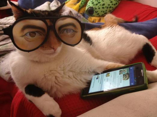 fotos gatos