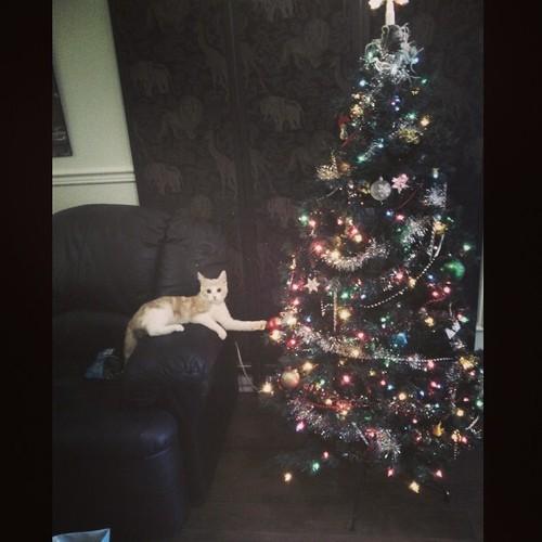 gato arbol navidad